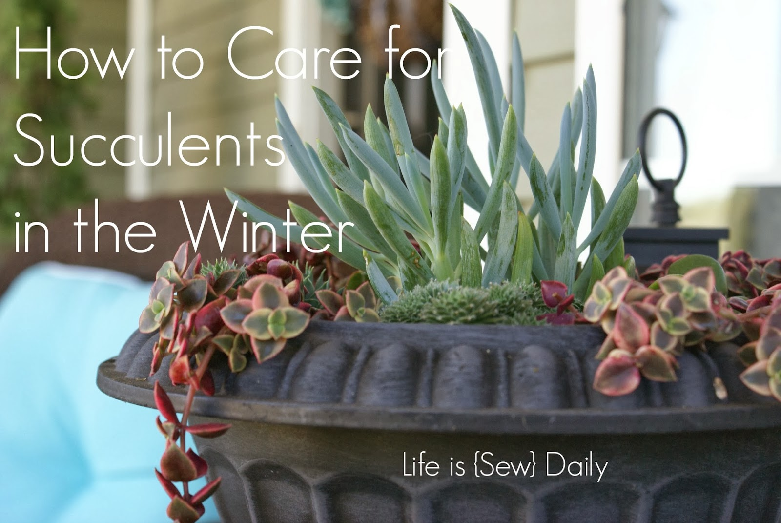 Life Is Sew Daily How To Care For Succulents In The Winter