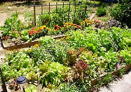 raided bed vegetable garden