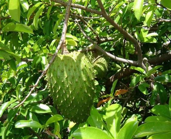 obat herbal asam urat alami dan berkhasiat share the