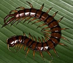 Serangga Berbahaya Yang Perlu Diketahui