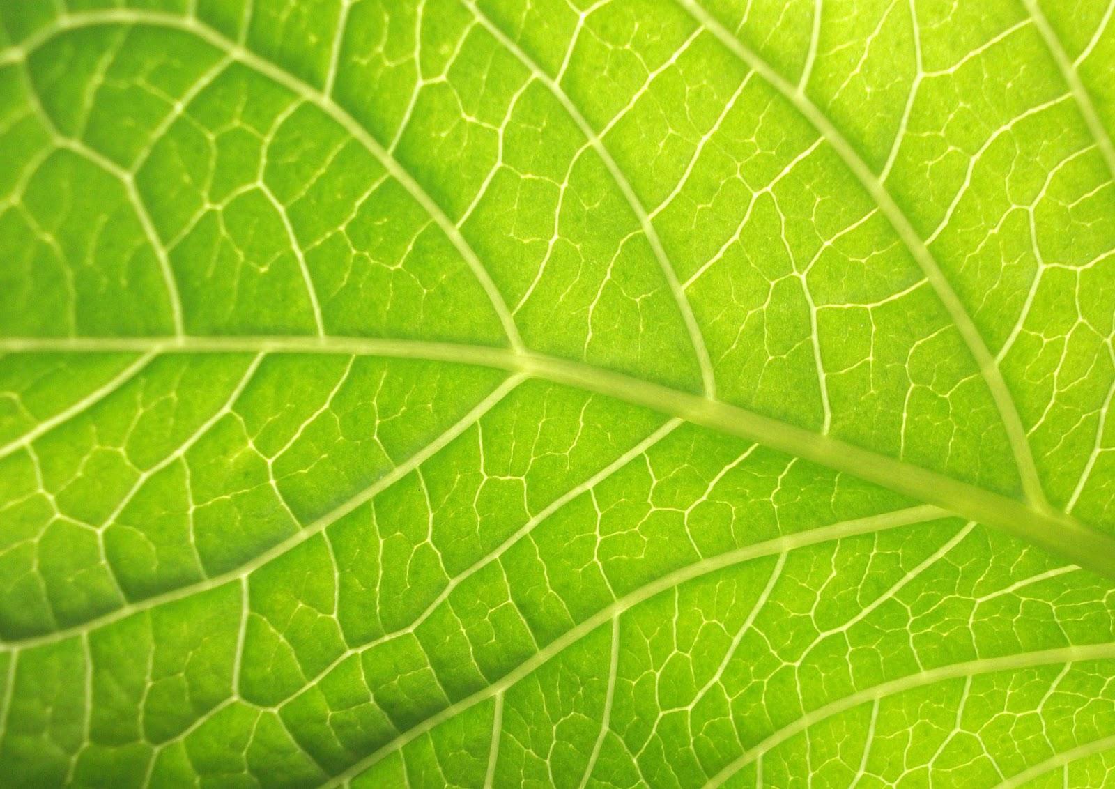 Arte colores terciarios - Color verde hoja ...