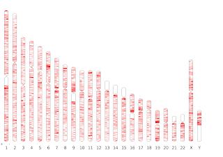 Pseudogene distribution in human