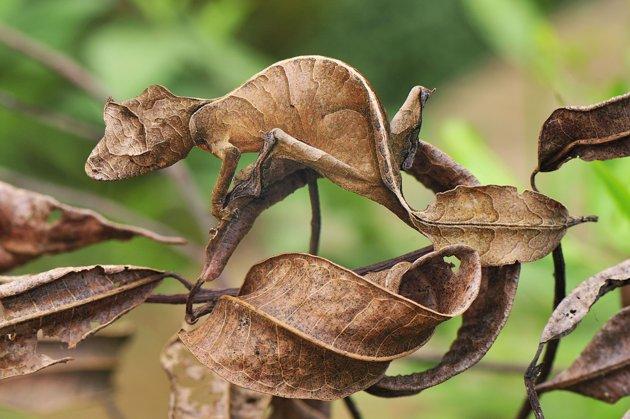 Plain Cool Animal Camouflage