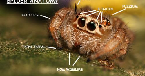 Miss Cellania: Spider Anatomy