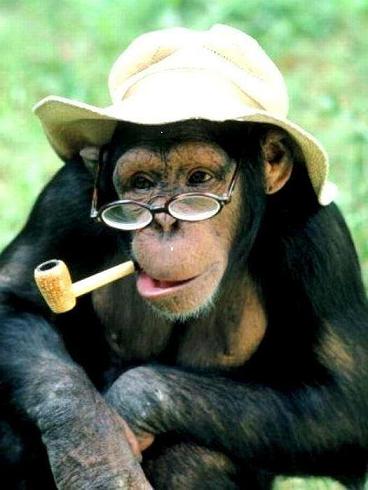 Η μεταλλαγμένη μαϊμού...