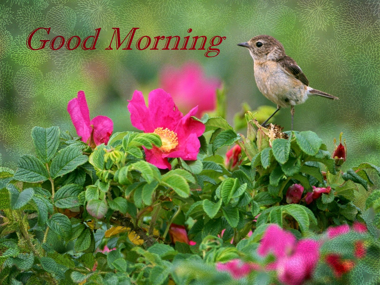 Good Morning All Image Download : Bird sound effect greetings for fresh good morning