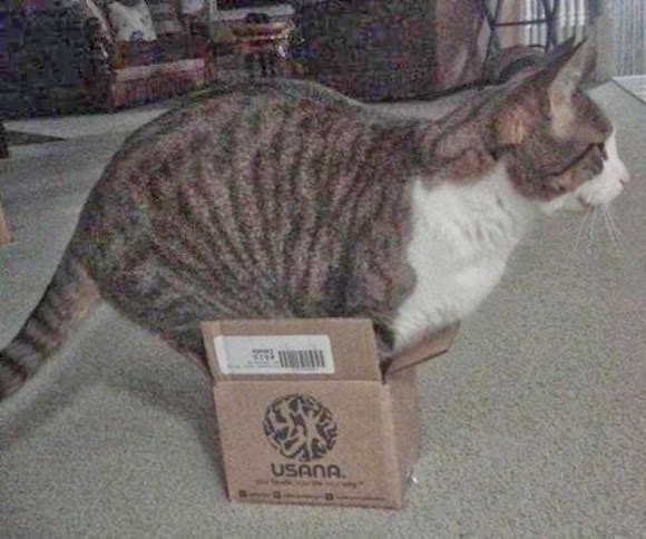 """""""Outrageous!"""" Battle of puss! ! Small box is also my position!"""