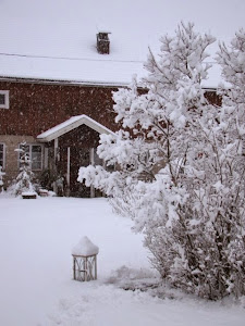 Helmikuun luminen aamu