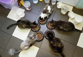 Defensores dos animais criam café com gatos na Sibéria (Foto: Ilya Naymushin/Reuters)