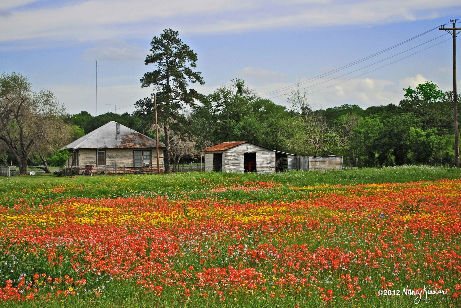 wild about texas a whole field of wildflowers for a backyard