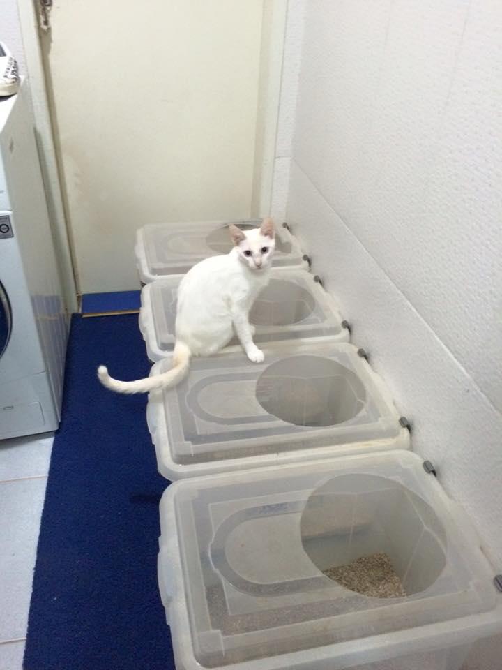 Conta tudo cacau casa com gato sem odores dica de - Fotos de casas para gatos ...