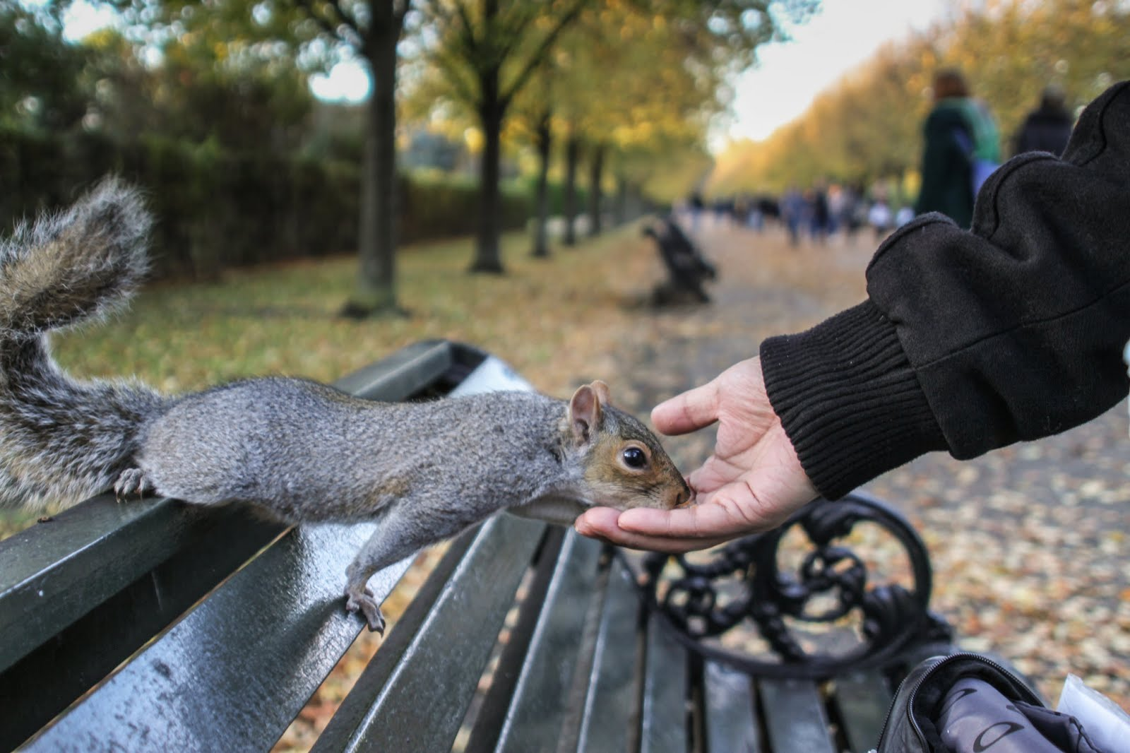 Squirrels at Regent's Park, iconic london