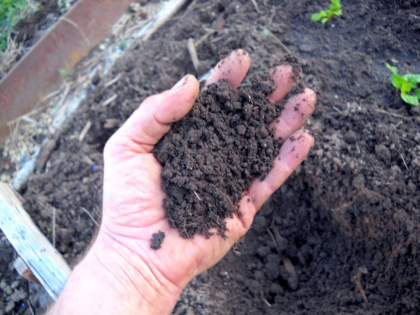 Spruce hill urban horticulture must get hands in dirt for Soil 7 days to die