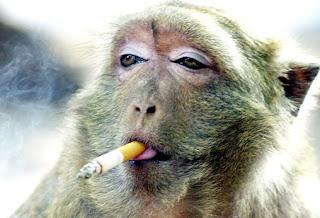 Kesehatan: Merokok di Pagi Hari Tingkatkan Risiko Kanker Mulut