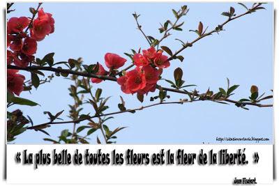 Citation sur la vie : citation sur fleur
