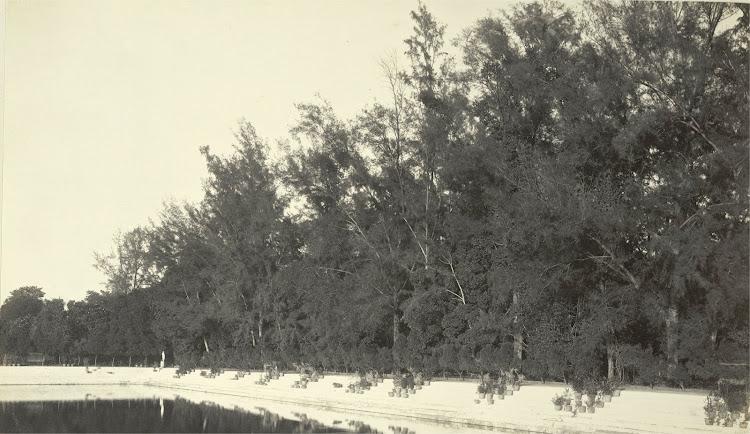 An avenue on the banks of the Manoshsarovar Tank in Dilkusha Gardens - Burdwan (Bardhaman), Bengal, 1904