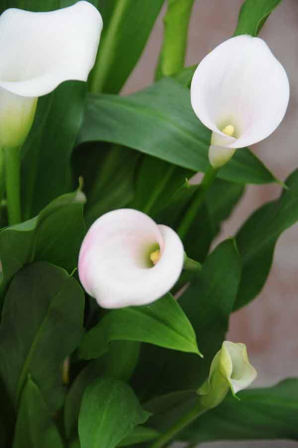 Elegancia en vertical flores para eventos y ceremonias - Todo tipo de plantas con sus nombres ...