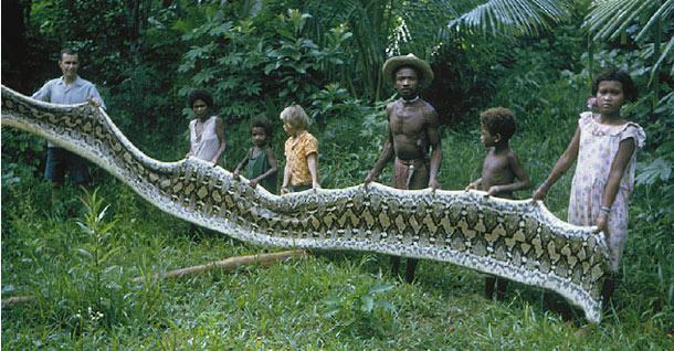 Agta python skin - world biggest snake