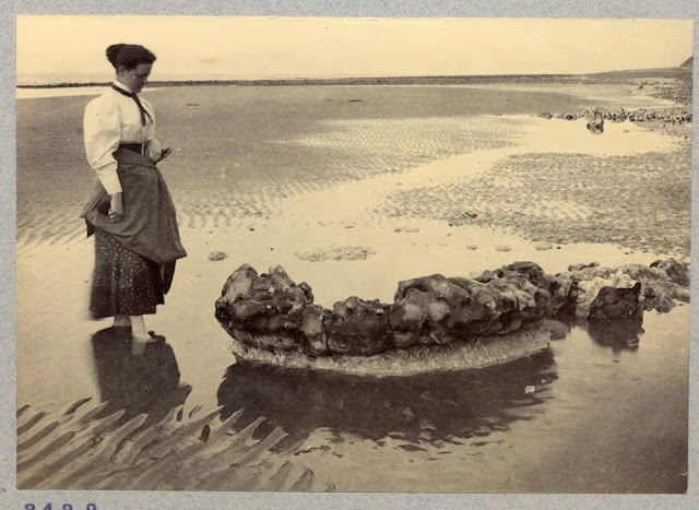 Sheringham beach. Ring of flint.  Original image number BAAS03432. From the British Association for the Advancement of Science photograph collection