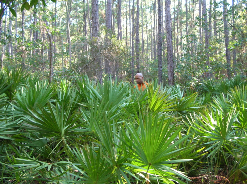 saw palmetto reduce testosterone
