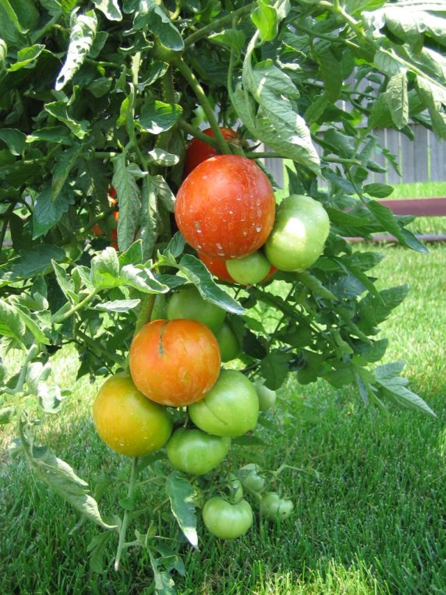 Jardinitis qu sembrar en el huerto y cuando for Asociacion de plantas en el huerto