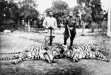 Tiger hunting is a crucial issue for wildlife lovers