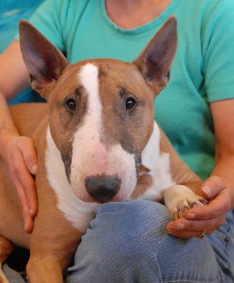 Adopt Rescue Dogs Las Vegas