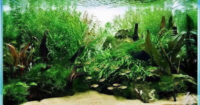 Setiaji's Site : Jenis-jenis ikan yang dilarang ada di ...