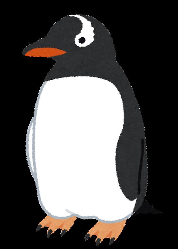 ジェンツーペンギンのイラスト