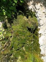 Un regalim d'aigua surt de la Font de Vilarjoan