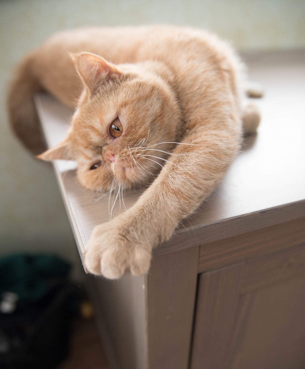petsmart diabetic cat food