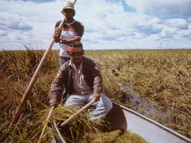 """Thu hoạch cây trồng từ các lĩnh vực lúa gạo với một chiếc xuồng (From: """"Hướng dẫn du khách người Mỹ bản địa"""")"""