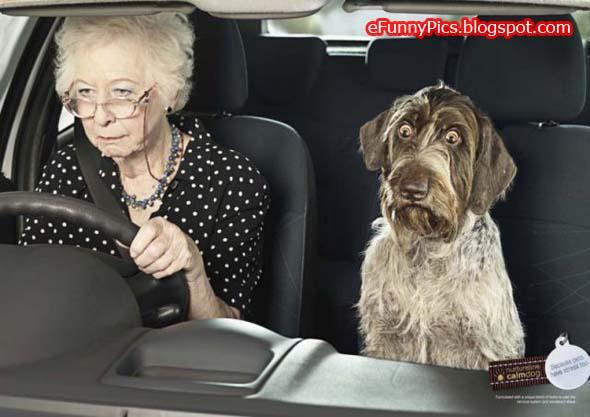 Grandma's Driving Style