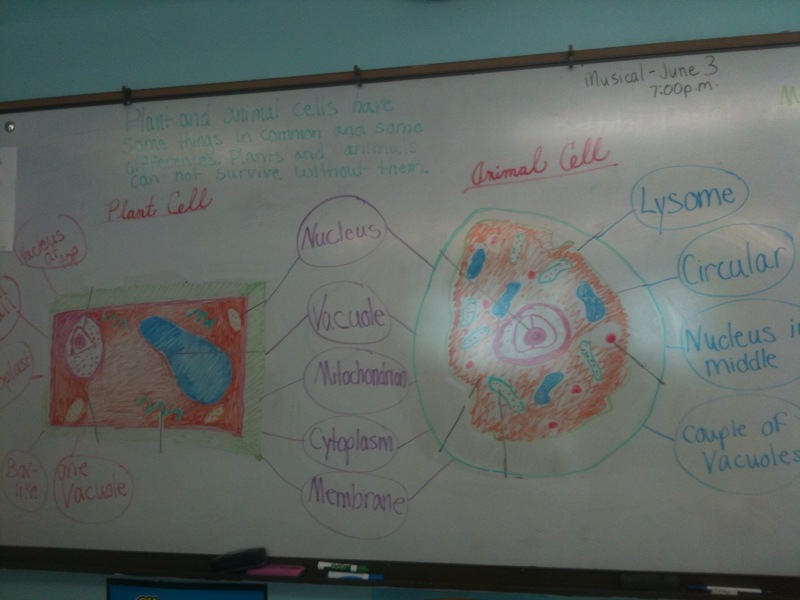 comparing and contrasting plant and animal cells essay Plant and animal cells for the plant section, students should note that plant cells have chloroplasts, cell walls, and larger vacuoles 6.