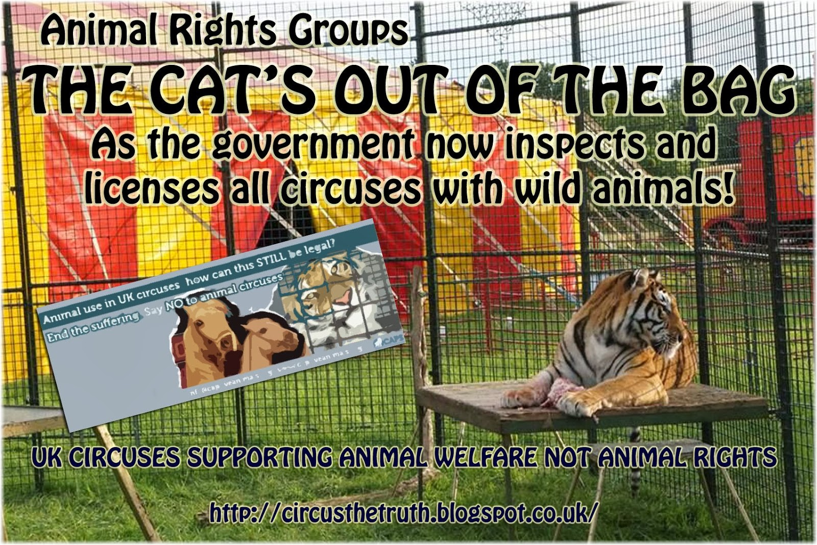argumentative animals in zoos circuses lessons teach