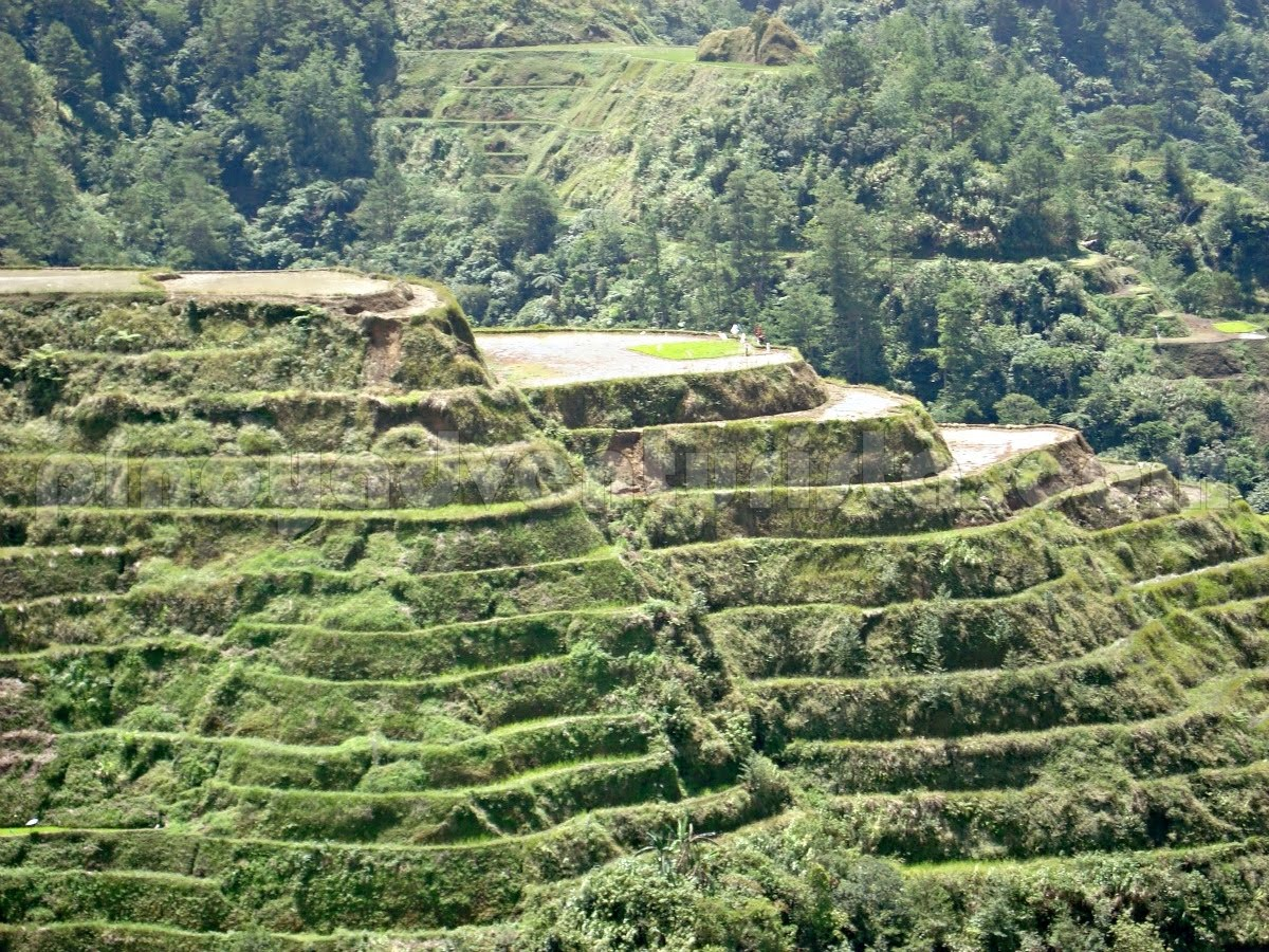Ifugao seeing the banaue rice terraces a childhood for What are terraces