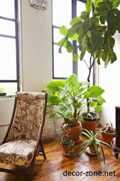 Large indoor plants ideas make a green corner - Best indoor large plants ...