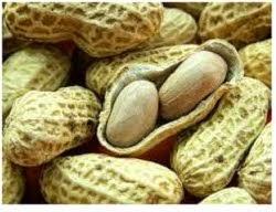 Garam membantu memecah kacang