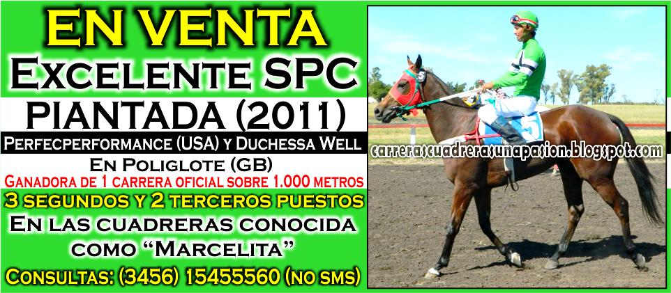 PIANTADA - VENTA - 21.07.2015