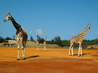 (Kenya) - Mombasa - Haller Park