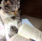 Cik Kuya (pengawas library)