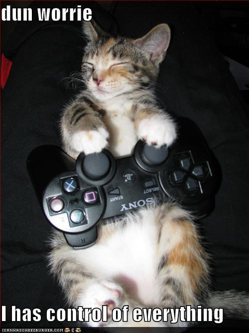 Funny Cats Playing Video Games