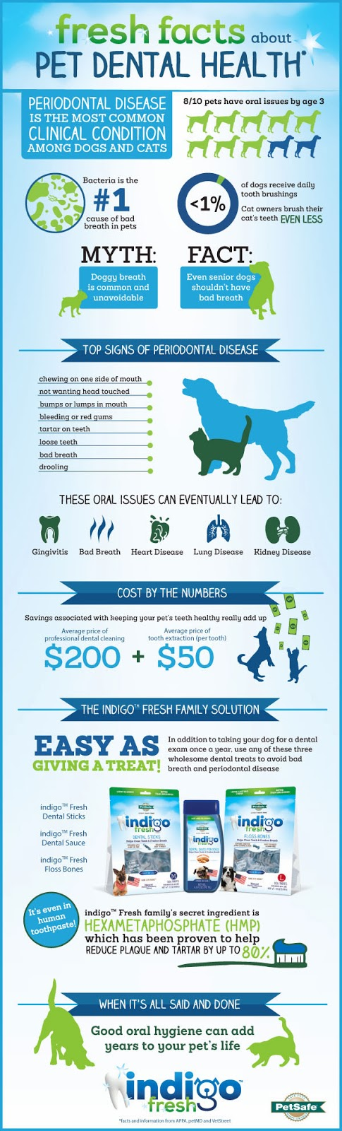 Dog dental health infographic