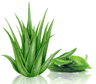 heath benefit of aloe vera