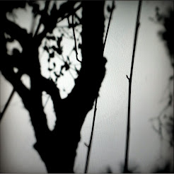 Qerelen (2014)