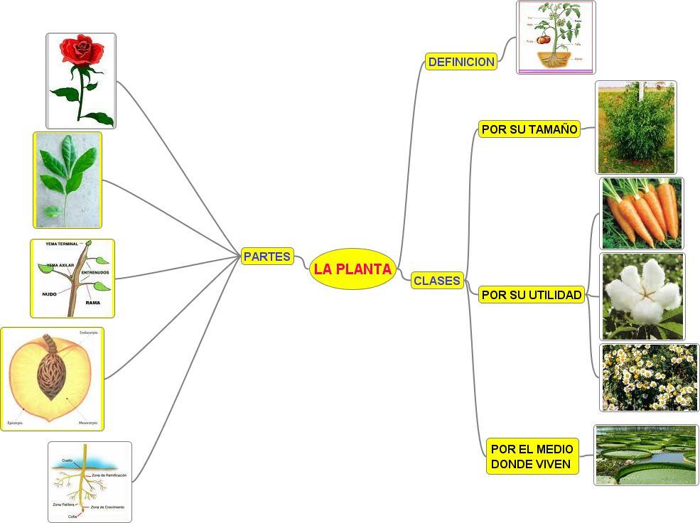 J venes creadores mapas mentales y conceptuales - Cosas sobre las plantas ...