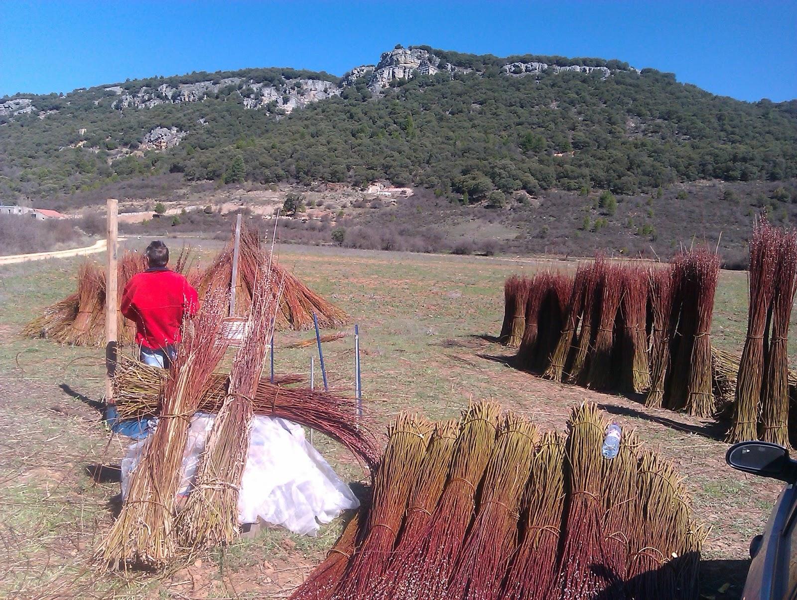 recogida del mimbre Cuenca turismo artesanía