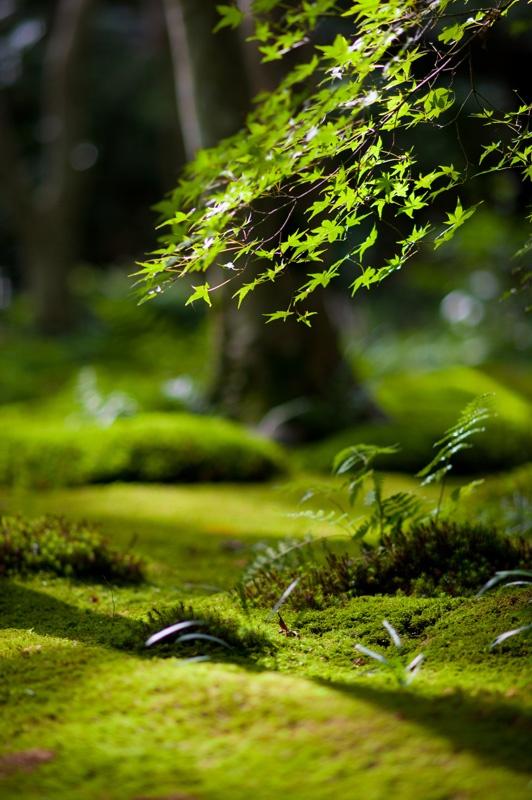 forest floor close-up | Express Photos
