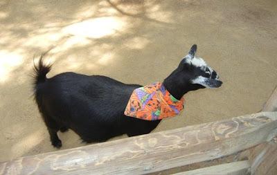 Goat at Disneyland