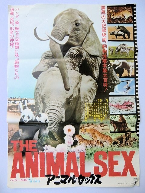 aimal-sex-movies
